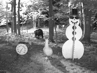 Black bear walking near the snowman on August 12, 2007